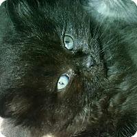Adopt A Pet :: READY 12 8 - Little Neck, NY