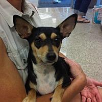 Adopt A Pet :: Jordan - Fresno, CA