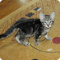 Adopt A Pet :: Carmine - Southington, CT