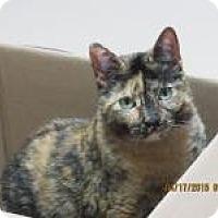 Adopt A Pet :: Grace - Quilcene, WA