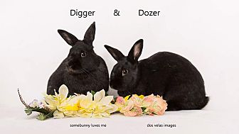 Other/Unknown Mix for adoption in Jurupa Valley, California - Digger and Dozer