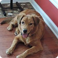 Adopt A Pet :: Tootsie - Murrells Inlet, SC