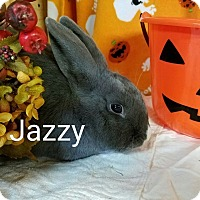 Adopt A Pet :: Jazzy - Williston, FL