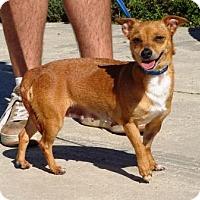 Adopt A Pet :: Trixie - Lathrop, CA