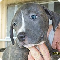 Adopt A Pet :: Cassiopeia - Mexia, TX