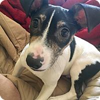 Adopt A Pet :: Kipper - Ozone Park, NY