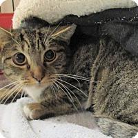Adopt A Pet :: Carnation - Reeds Spring, MO