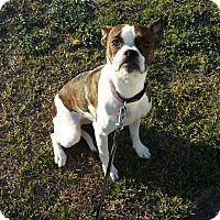 Adopt A Pet :: BRANDI - Wilmington, NC