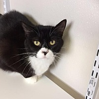 Adopt A Pet :: Big Girl - Fremont, OH
