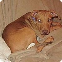 Adopt A Pet :: Louise - Copperas Cove, TX