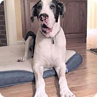 Adopt A Pet :: Ruby - York, PA