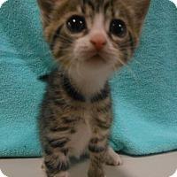 Adopt A Pet :: Ned - Reston, VA