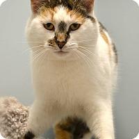 Adopt A Pet :: Misha - Byron Center, MI