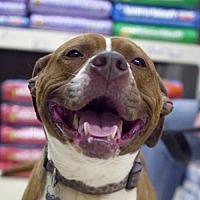 Adopt A Pet :: Hazel *Adopt or Foster* - Fairfax, VA
