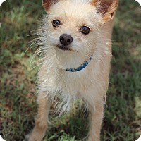 Adopt A Pet :: Savannah - McAllen, TX