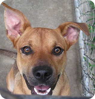 Shepherd (Unknown Type) Mix Dog for adoption in Tahlequah, Oklahoma - Gracie