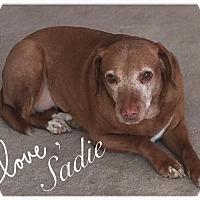 Adopt A Pet :: Sadie - Iowa, Illinois and Wisconsin, IA