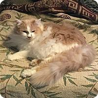 Adopt A Pet :: Sammy - Hopkinsville, KY