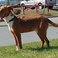 Adopt A Pet :: Zack - Somers, CT