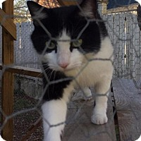Adopt A Pet :: Finn - Columbia, SC