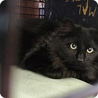 Adopt A Pet :: Falcon - Acushnet, MA