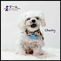 Adopt A Pet :: Charly - Richardson, TX