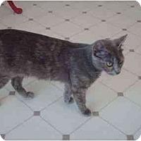 Adopt A Pet :: Garfieldina - El Cajon, CA