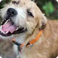 Adopt A Pet :: Lasi - Tinton Falls, NJ