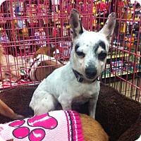 Adopt A Pet :: Oreo - Fowler, CA