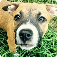 Adopt A Pet :: Calypso#06F - Orlando, FL