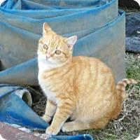 Adopt A Pet :: Toby - Denton, TX