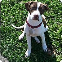 Adopt A Pet :: Hugo - Toledo, OH