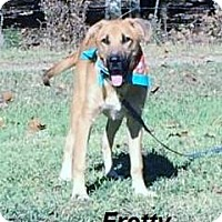 Adopt A Pet :: Fretty in CT - Manchester, CT