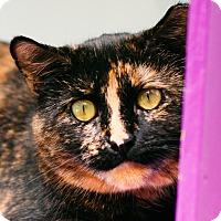 Adopt A Pet :: Rosie - Spirit Cat - Brimfield, MA