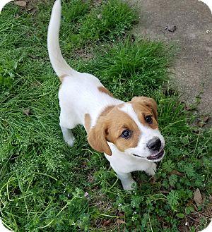 Adopt A Dog Manchester Ct