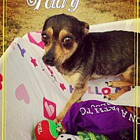 Adopt A Pet :: Fairy - Seaford, DE
