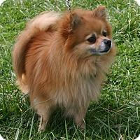 Adopt A Pet :: Jessup - Waldorf, MD