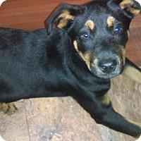 Adopt A Pet :: Abbott - south plainfield, NJ