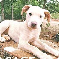 Adopt A Pet :: Sage - Ellaville, GA