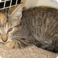 Adopt A Pet :: Brunet - Dallas, TX