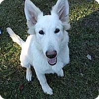 Adopt A Pet :: Hannah - Green Cove Springs, FL