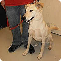 Adopt A Pet :: Cal - Wallaceburg, ON