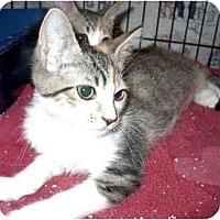 Adopt A Pet :: Zigzag - Colmar, PA