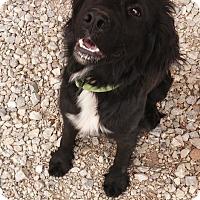 Adopt A Pet :: Molly - Chewelah, WA