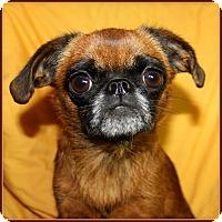 Adopt A Pet :: KINSEY - ADOPTION PENDING - Seymour, MO