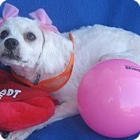 Adopt A Pet :: Ella-WATCH MY VIDEO!!! - Irvine, CA