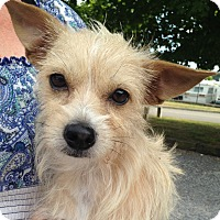 Adopt A Pet :: Dory - Hagerstown, MD