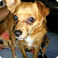 Adopt A Pet :: YODA - Anderson, SC