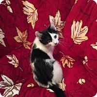 Adopt A Pet :: Skipper - Colmar, PA