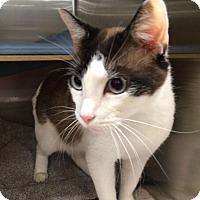 Adopt A Pet :: Oliver - Overland Park, KS